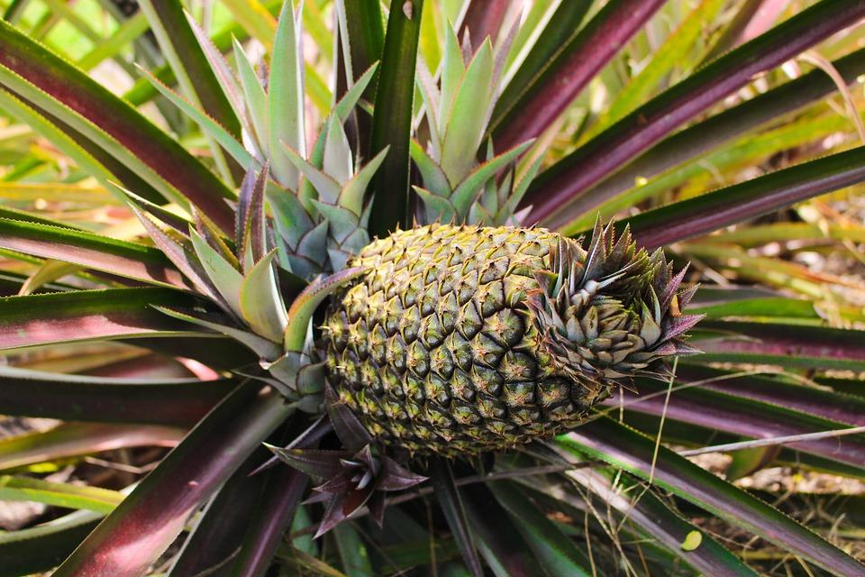 pineapple-2521271_960_720